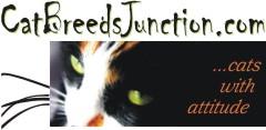 cat breeds junction banner
