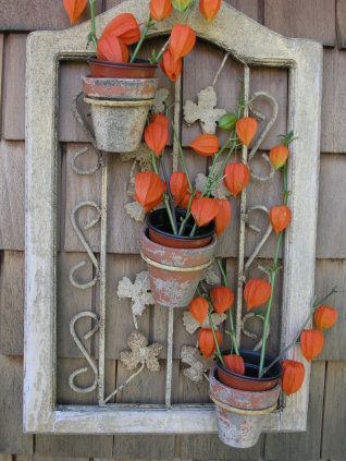 Chinese Lantern stems in a picture frame