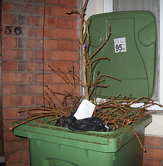 tree in the trash