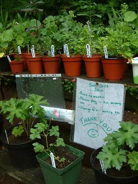 Frugal Gardening Ideas The Thrifty Gardener
