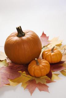 pumpkins,leaves