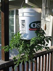 tomato bucket container
