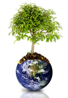 tree,earth