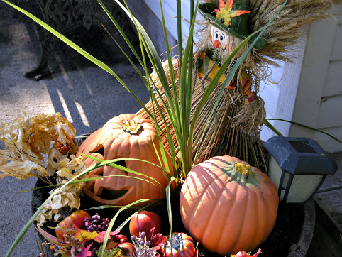 autumn plant barrel