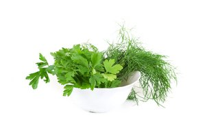 dill parsley