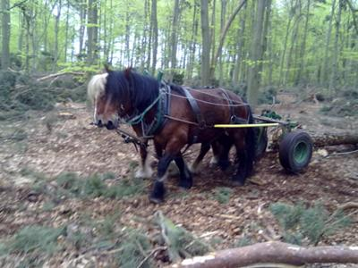 Draft Horses As A Means Of Green Power