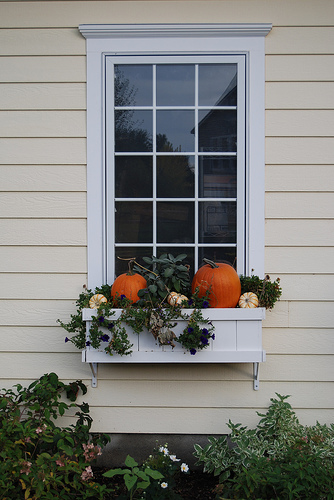 Autumn window-box with pumpkins, flowers