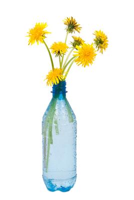 vase of dandelions