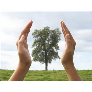 save a damaged tree