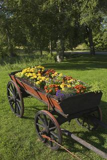 wagon,flowers