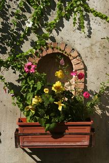 windowbox,flowers